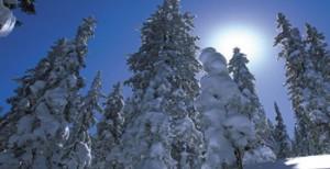 Schnee Wald im Salzburger Land